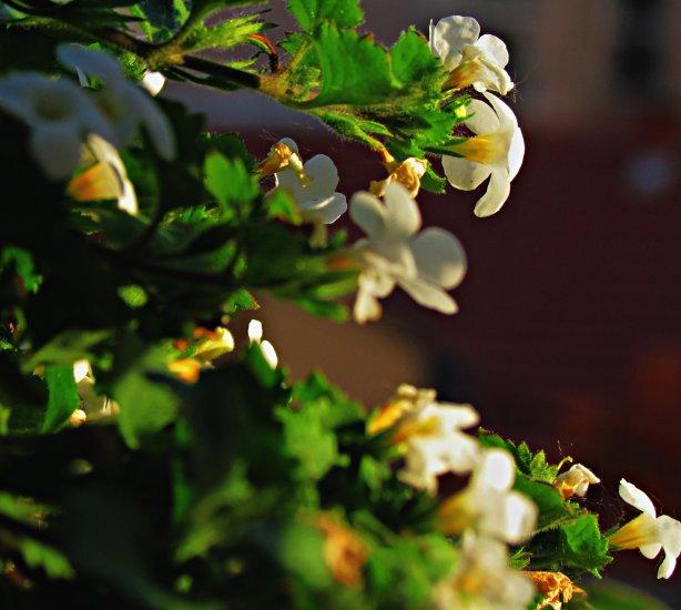 Пролеће